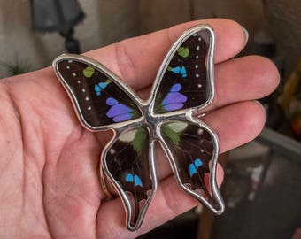 Real Butterfly Display. Graphium weiskei Butterfly Display. Tabletop Display. Boho Style Decor. Blue Butterfly Shadowbox. Framed Butterfly