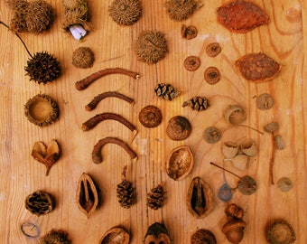 Natural materials for faery furniture and accessories, faery houses, faery gardens, flower arranging, nature crafts