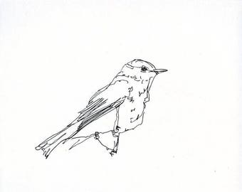 Sketchbook Sale - Bird #20 Original Ink Line Drawing - 8x10 Songbird Original Art