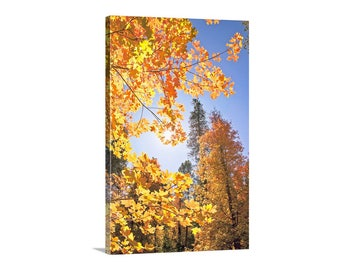 Fall Photography, Autumn Art, Catalina Mountains, Tucson Arizona, Fall Leaves, Nature Photography, Vertical Print, Autumn Leaves, Canvas Art