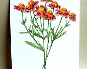 Helenium watercolor painting