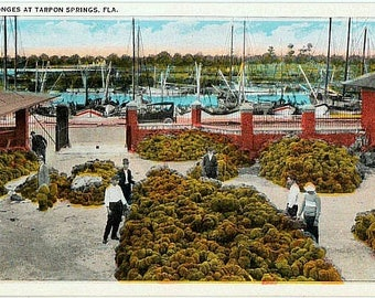 Vintage Florida Postcard - The Sponge Exchange and Sponge Fleet, Tarpon Springs (Unused)