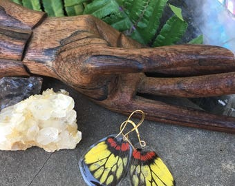 Yellow Red Butterfly Wing Earrings, Real Butterfly earrings, insect jewelry, Moth, Cruelty Free, Hippy, Gypsy, Boho, Recycled BW048