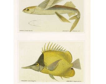 Fish Print (two on page) CLEARANCE