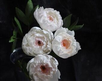 Paper Peony Bundle - Pink Blush Crepe Paper Flowers
