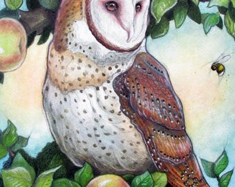 Barn Owl in Apple Tree Giclee Print