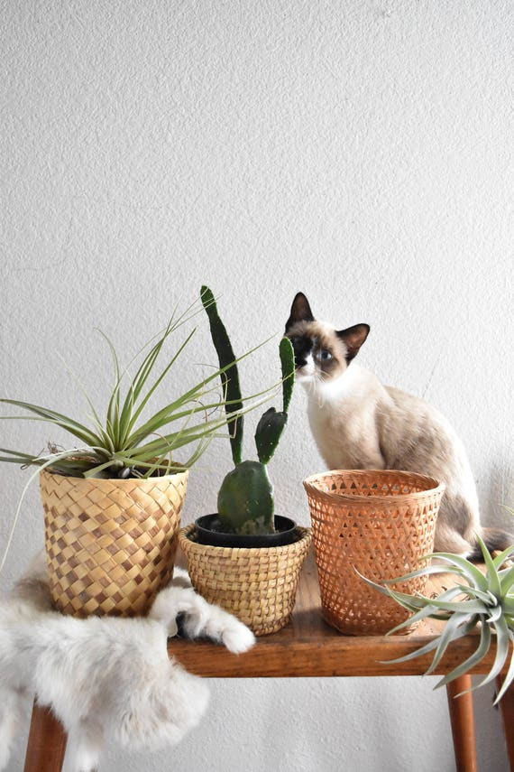 lovely set of 3 small woven rattan bamboo basket planters