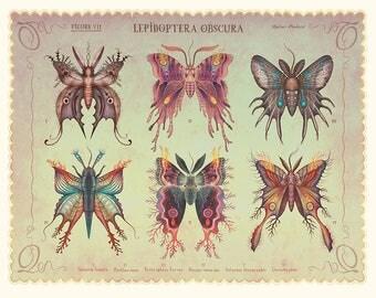 Lepidoptera obscura - Art print