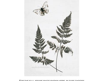 Botanical Photograph, Rustic Farmhouse Art, Butterfly & Fern Art, Modern Rustic Decor, Nature Prints, Woodland Decor   'A Graceful Ballet'