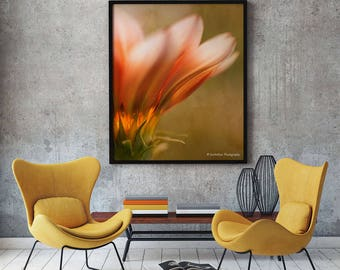 Gazania Flower Photography, Home Decor Wall Art Print, Orange Wall Decor Print, Living Room Wall Decor, Fine Art Photography