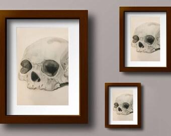 Digital Prints of Original Graphite Skull Drawing