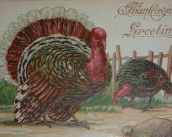 Big Tom and Hen Turkeys Antique Thanksgiving Postcard