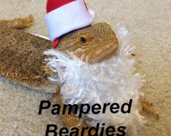 Santa Beard & Hat Costume for Bearded Dragons! One size fits most.