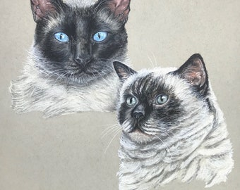 Two Cats Print