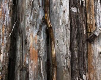 Walking stick foundwood