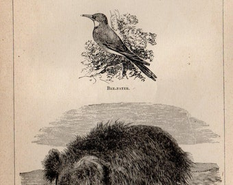 Antique Print, 1871 BEAR SLOTH ASWAIL Bee, Engraving, beautiful wall art vintage engraved b/w illustration animals 14