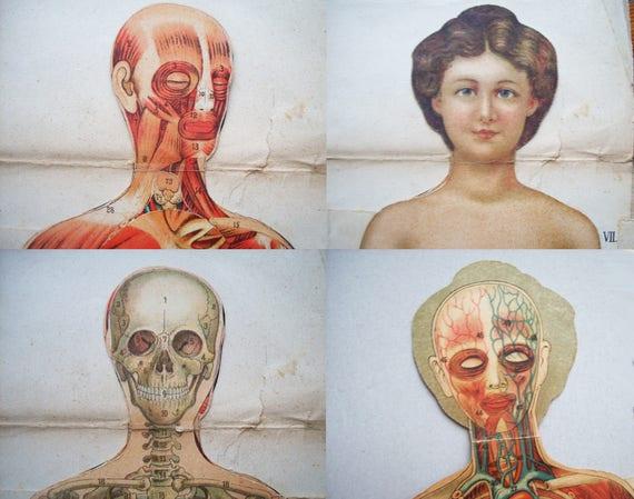 Nude medical model Nude Photos 3