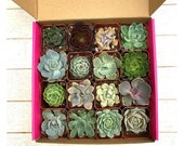 Assorted Succulent Gift Box-16 Succulent Collection Pack-Plant Gift-Birthday Gift-Thank You Gift-Variety of Small Succulents-Gardener Gift