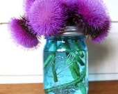 Wild Thistle, wildflowers, purple thistle, nature photography, still life photo, nature nursery,floral flowers,Scottish symbol,mason jar art