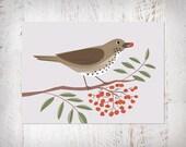 Singdrossel, Postkarte DIN A6