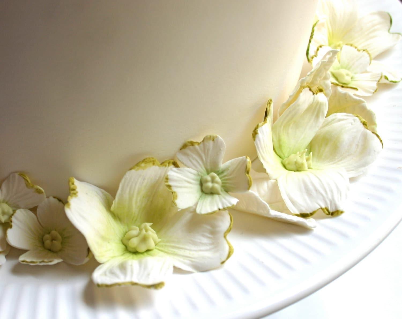 Съедобные Сахар Догвуд Цветет и листья