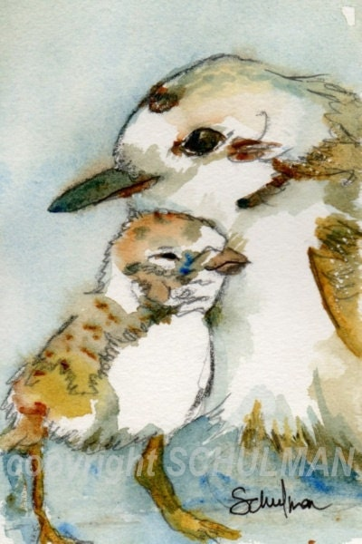 "Bird Painting, watercolor of wildlife art Snowy Plover 8x10"" with FREE white mat"