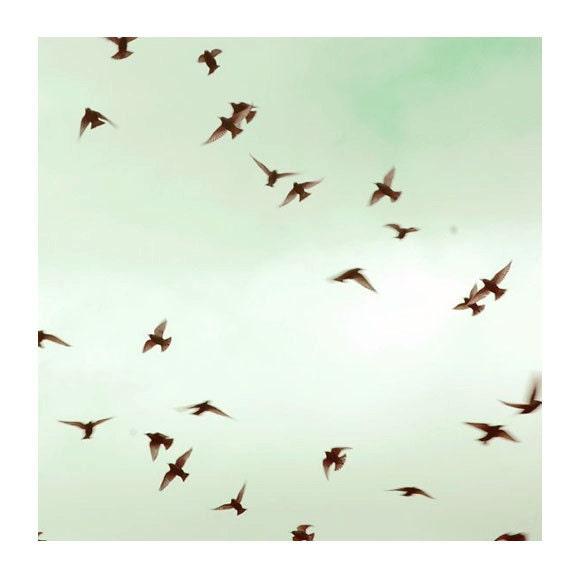 SALE Nature Photography, The Birds, 8x8 Print, Spring Sky, Mint Green, Fine Art  Photograph, Bird Photo