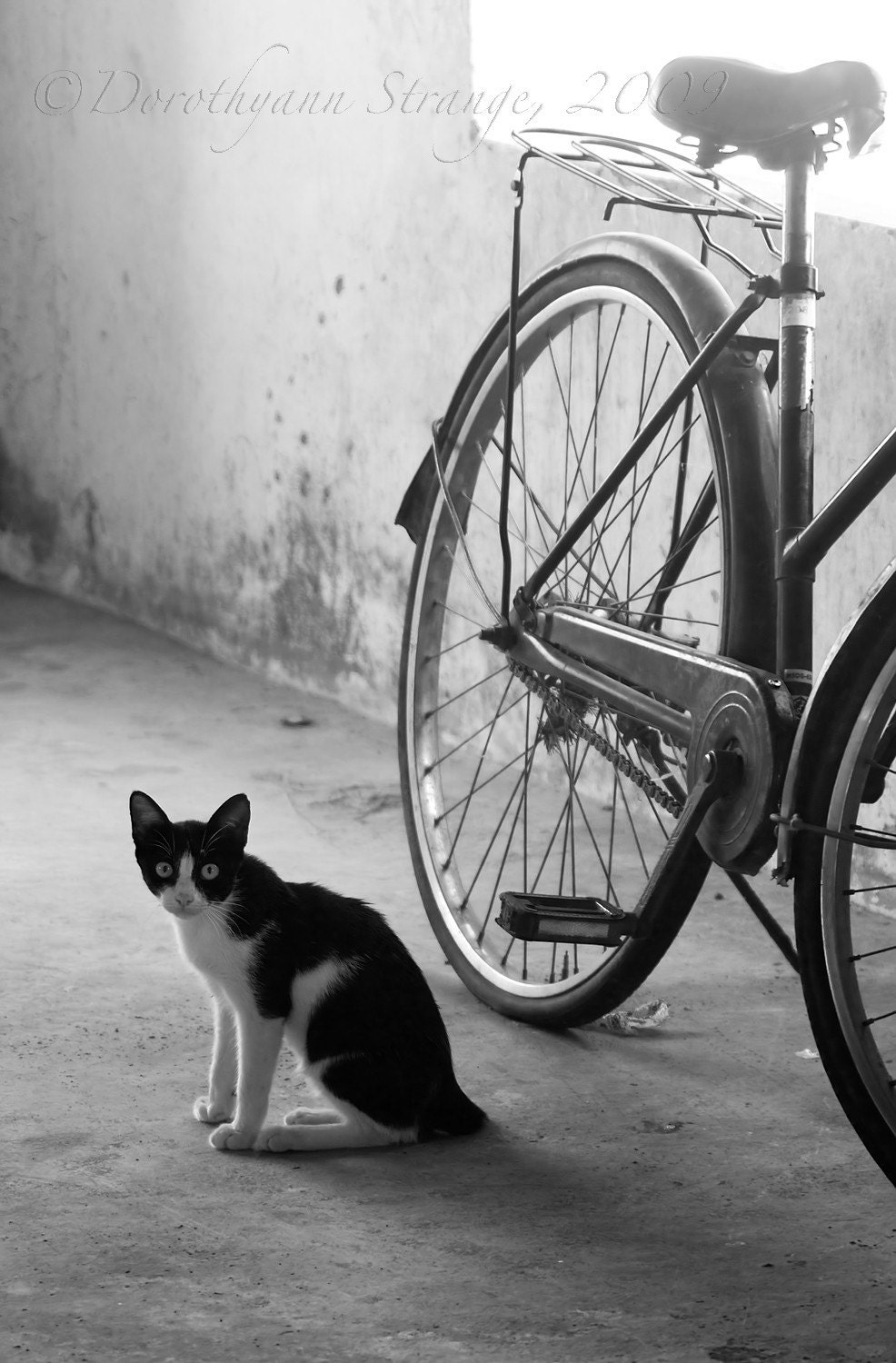 cat, bicycle, Black and White art photography, wall or desk decor - RightOnStrange