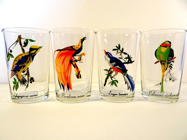 Vintage exotic bird glasses set bird by timelesstreasuresbym for Hand painted drinking glasses