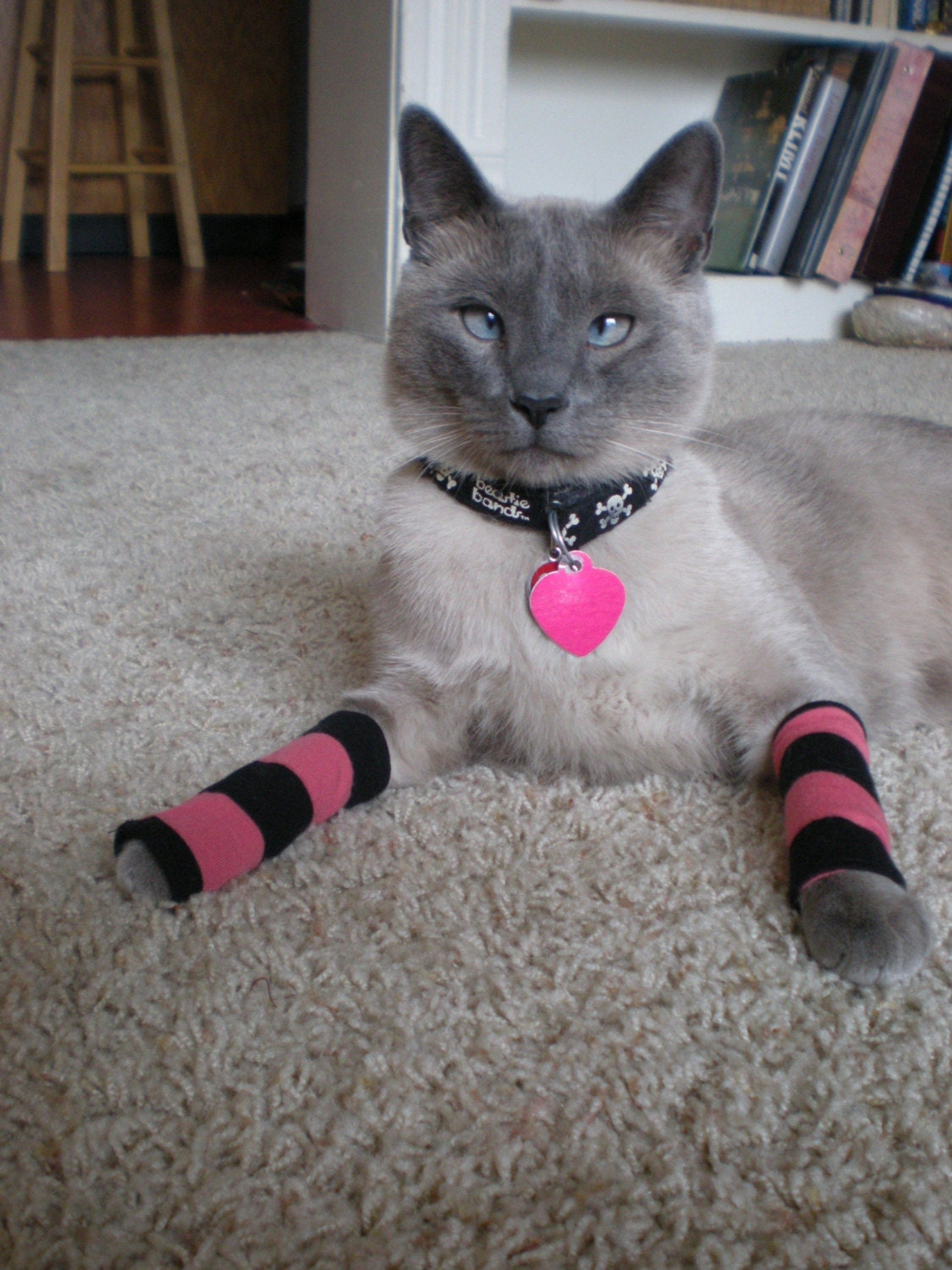 Kitty Legwarmers in Punk Pink