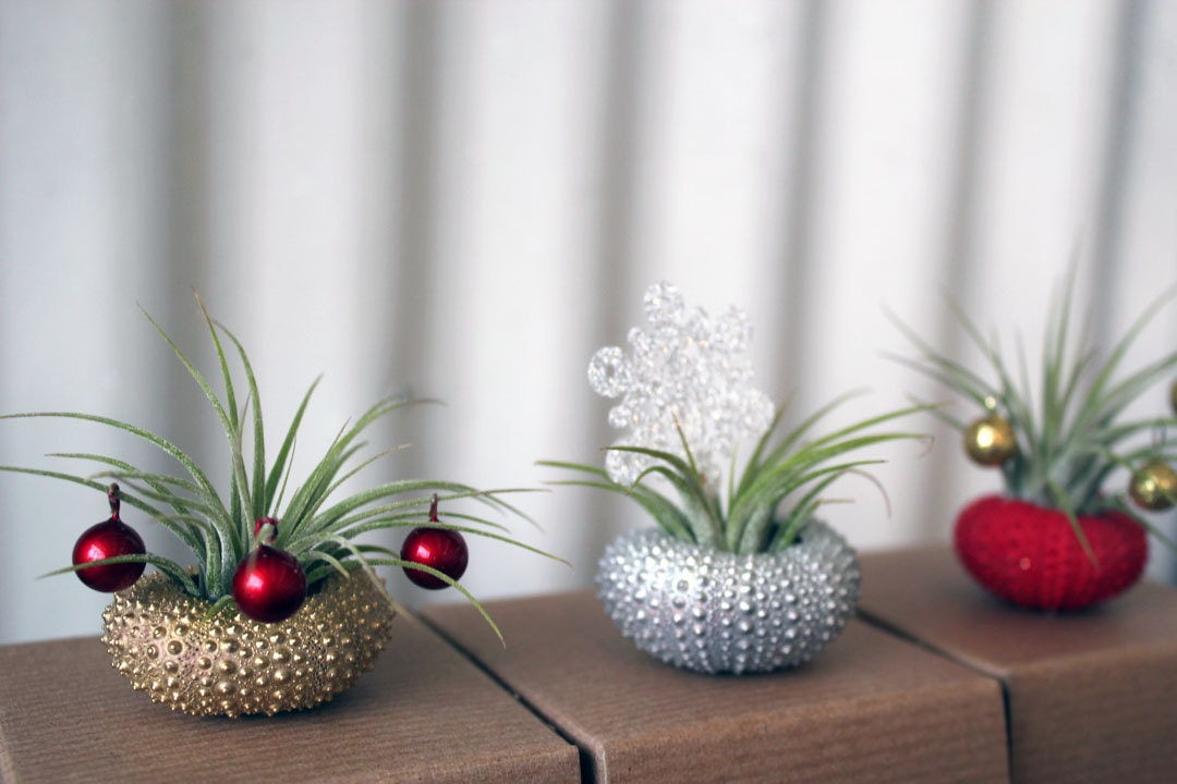 holiday trio  // air plant tillandsia // by robincharlotte