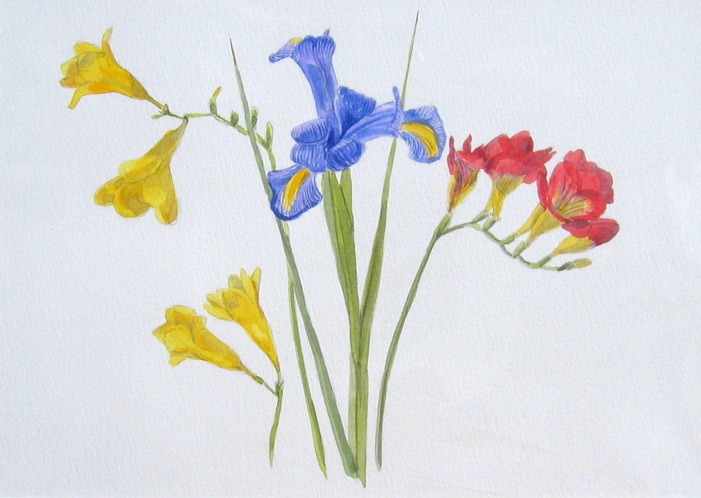 Iris and Fresias - Original Watercolour Painting
