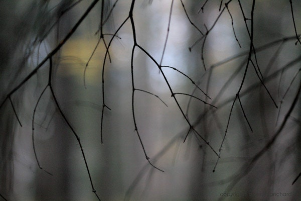 into the forest - 5x7 abstract bare branches nature macro mysterious woods photo - sand and petals photography - sandandpetals