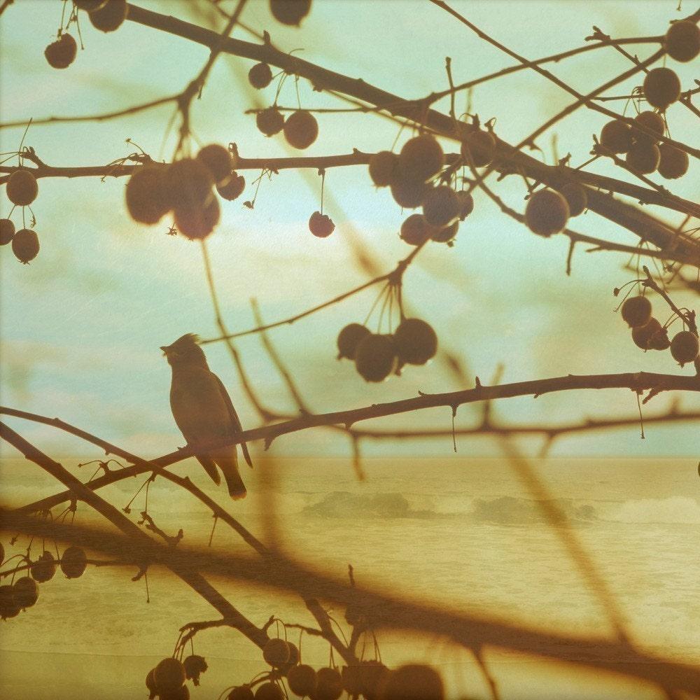 bird at beach photo print