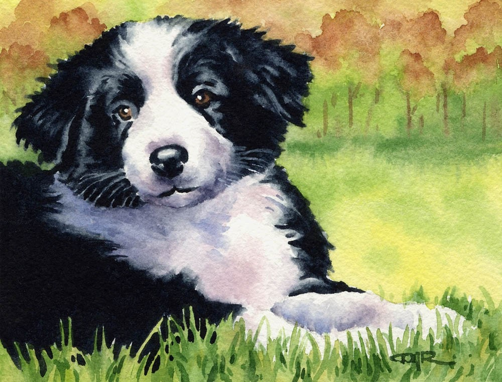 border collie puppies. order collie puppies