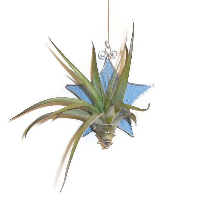 Stained Glass Air Plant Holder Pale Bue Star By