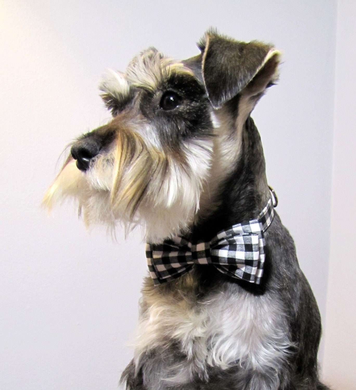 Gingham - Bowtie Adjustable Dog Collar - playfulpup