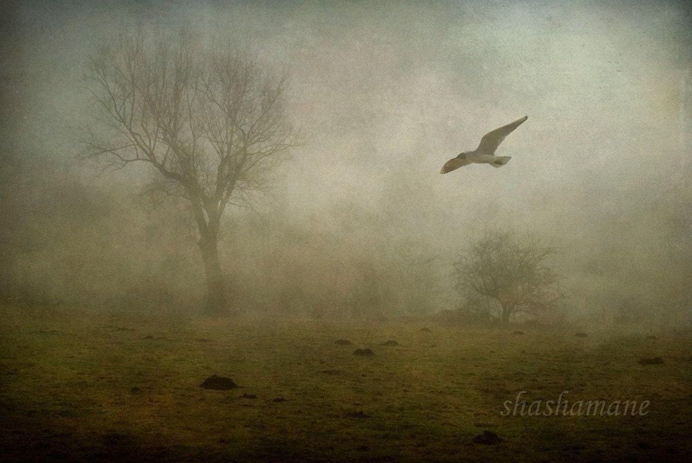 victims of circumstance ...  greeting card 95mm x 210mm high quality print, flying bird in the mist ...