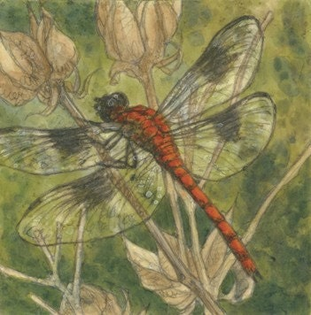 Summer Sale-Dragonfly Matted/Signed Giclee  Print - McNellyFineArts