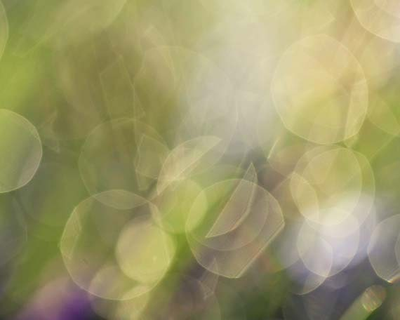Spring Dew Drops - dreamy green purple rain water drops bokeh circles pastel grass flowers nature macro 4x6 - AmeliaKayPhotography