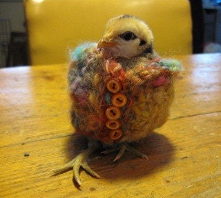 Chicken Poncho or Knitted Wrist Cuff