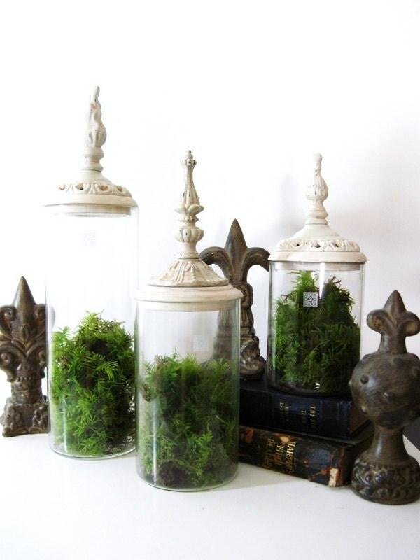 Ornate Moss Terrarium - Large