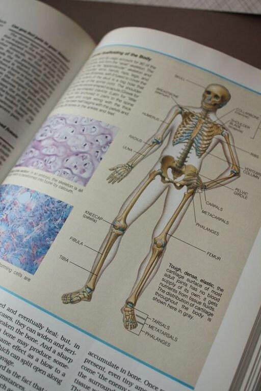 Modern Abcs Anatomy Recall Pattern - Image of internal organs of ...