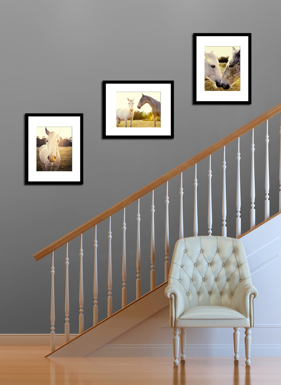 Wall Art Home Decor Horse Lovers Horse Photograph Three 11x14 Gift Set