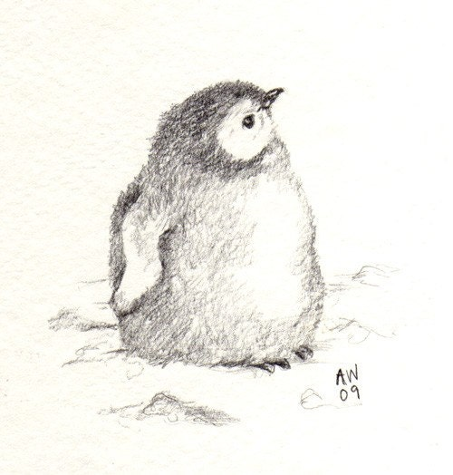 Gallery For gt Pencil Drawings Of Penguins