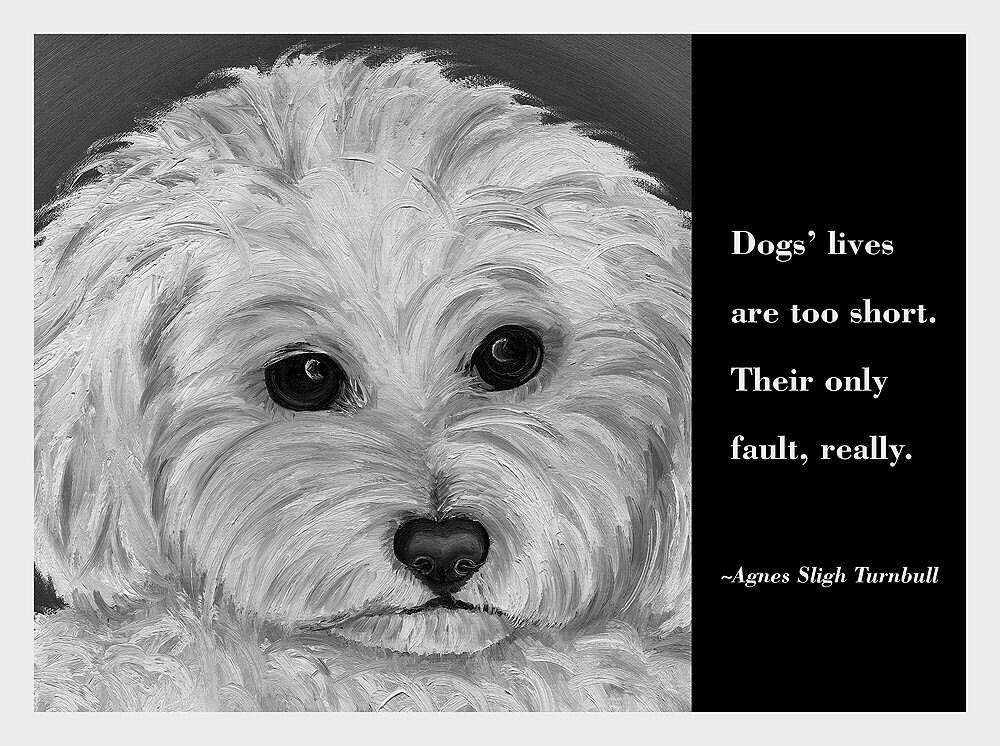 Οι σκύλοι δυστυχώς ζουν τόσο λίγο....