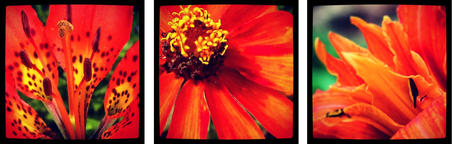 Optimistic Orange - Floral Photo Wall Art...Three Image Set - OberleighImages