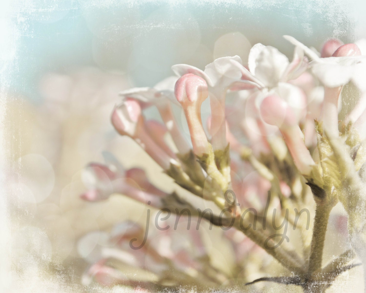 Arabesque I - PHOTO, baby pink, aqua blue, nursery decor, cherry blossom photo, spring photography, pale blue, baby girl, pastel colors - Jenndalyn