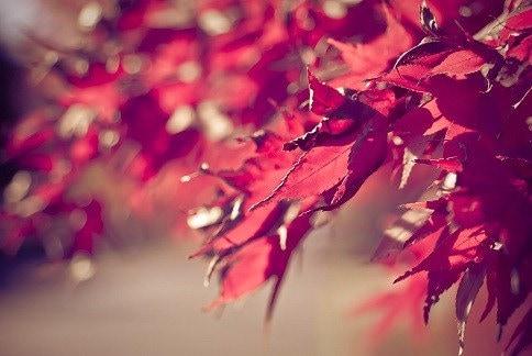 Spirited Maple 8x12 fine art photograph Autumn nature photoOn Sale 30% OFF