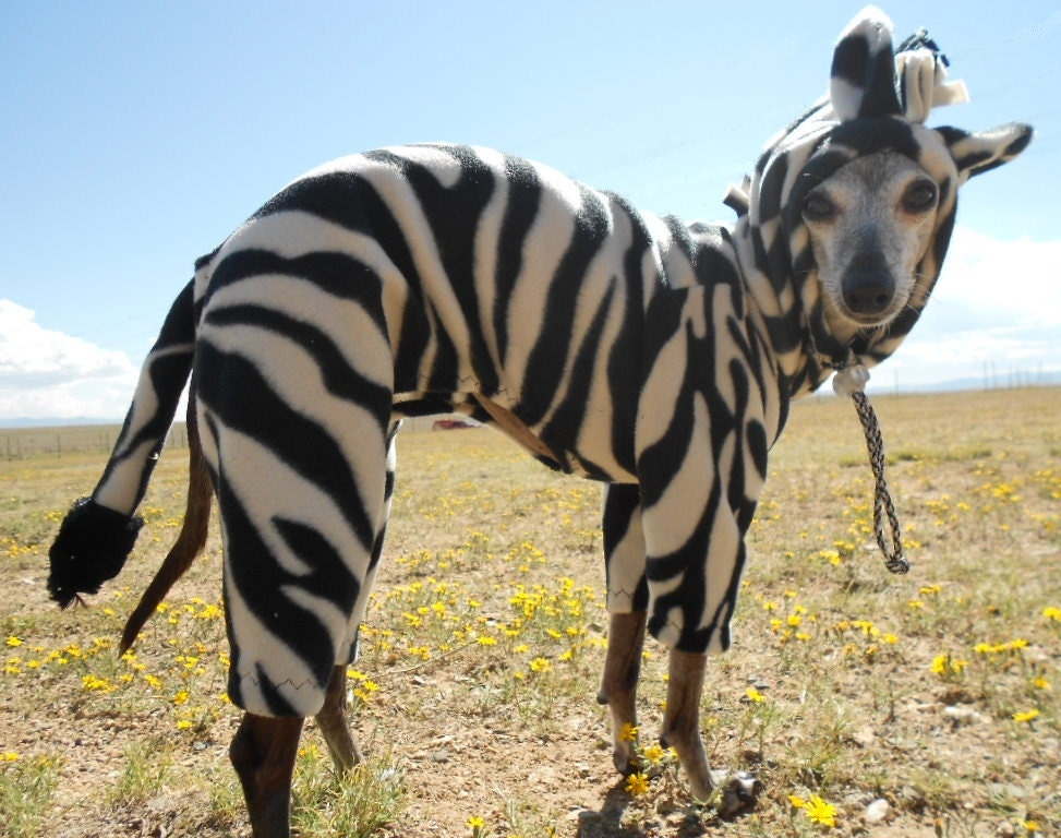 The Zebra Dog